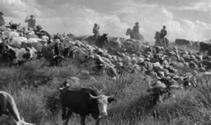 Cattle Drive, Red River, All Hat No Cattle