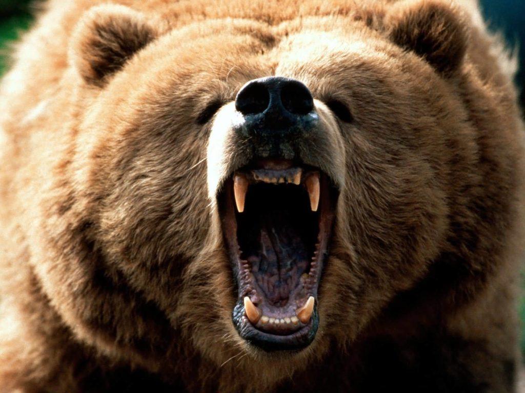 Raging Bear