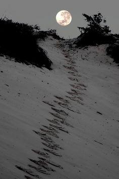 Moonlight Sand